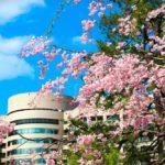 名古屋市内でアクセスが楽!開花前線の鶴舞公園の桜を写真で振返る。