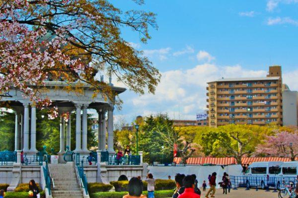 鶴舞公園と桜
