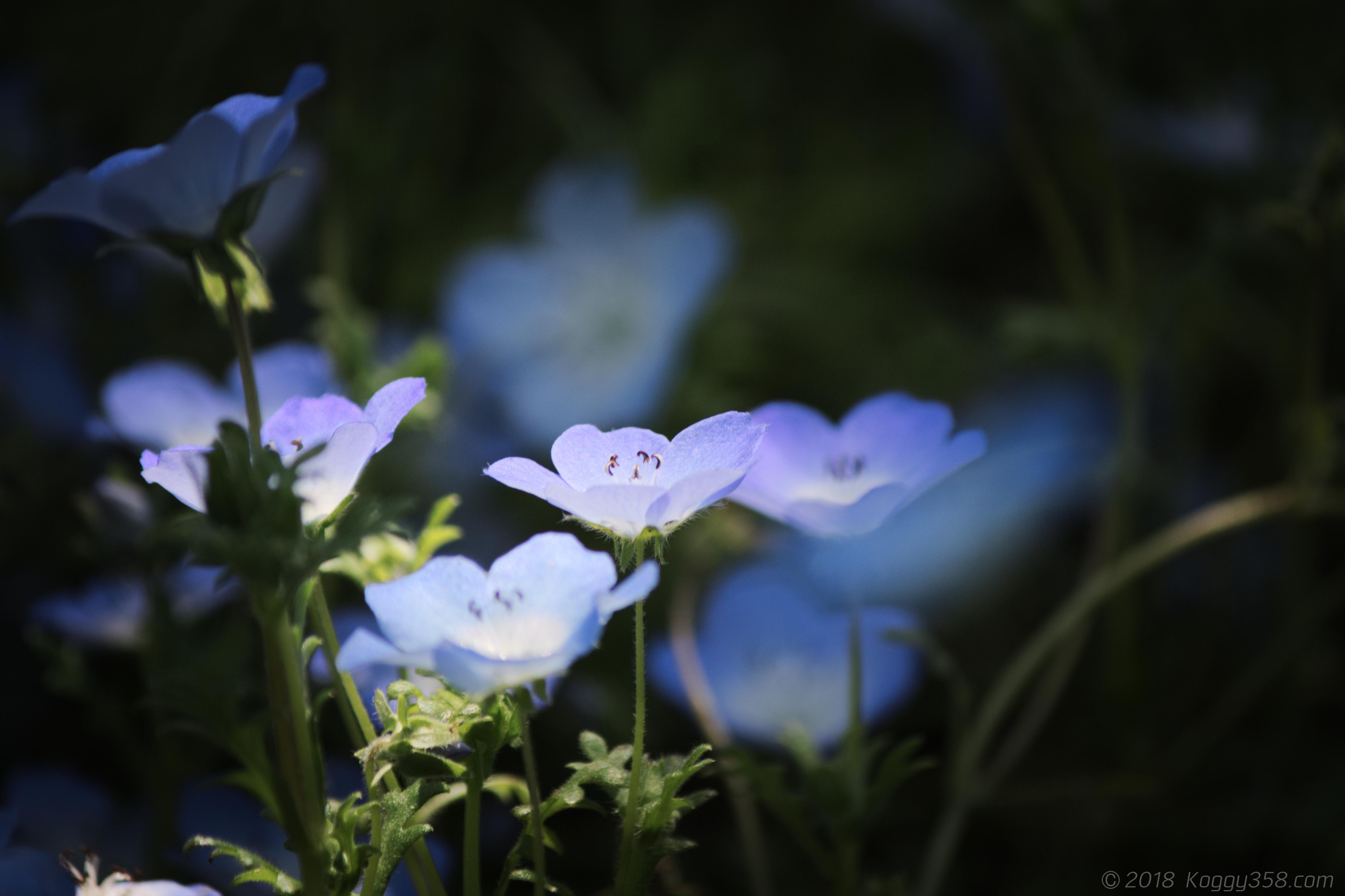 「スポットライトに咲く花を撮るポイントは1つ!簡単な取り方を伝授」の作例