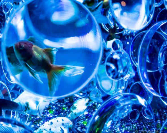 アートアクアリウムの青い水槽で泳ぐ金魚