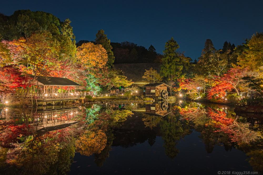 東山動植物園の紅葉ライトアップを撮影!三脚使用の条件の詳細あり!