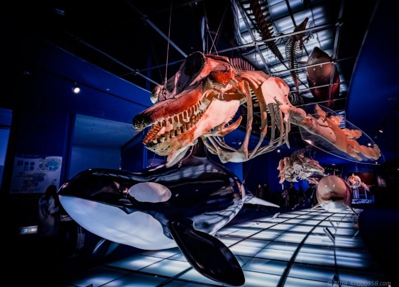 名古屋港水族館「進化の海」の骨格標本