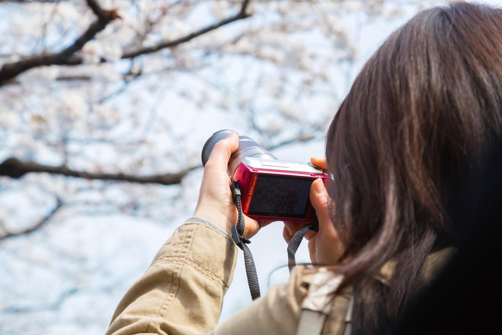 桜を接写する女性