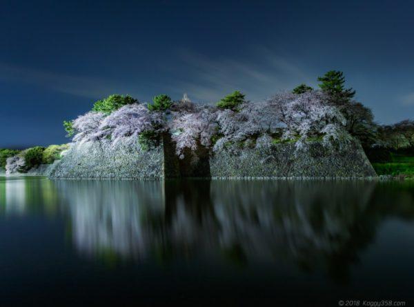 名古屋城の堀からの夜桜