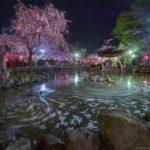 岐阜公園の日中友好庭園で桜のグルグル花筏の夜景を撮影してきたよ