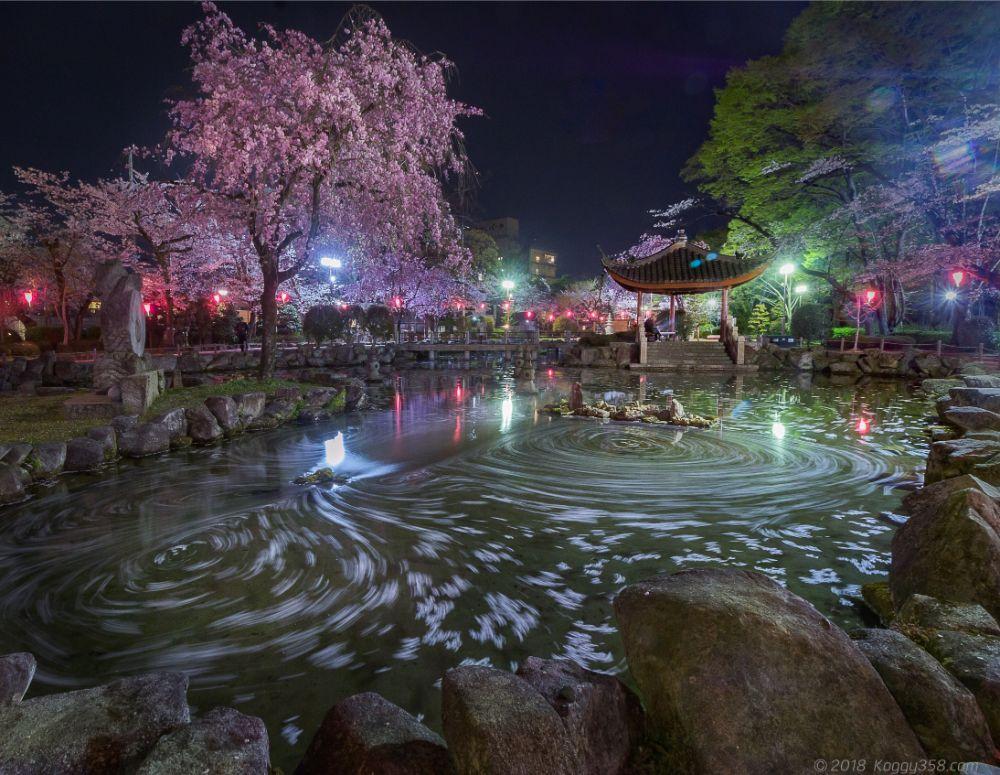 岐阜公園の日中友好庭園の桜グルグルの夜景