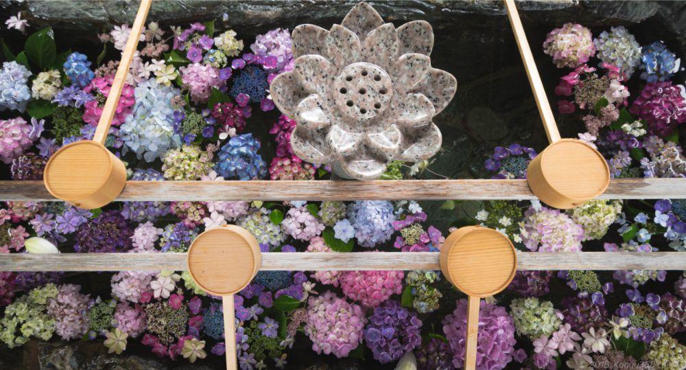 常念寺のあじさい手水舎と蓮を撮影【御裳神社とハシゴがおすすめ】