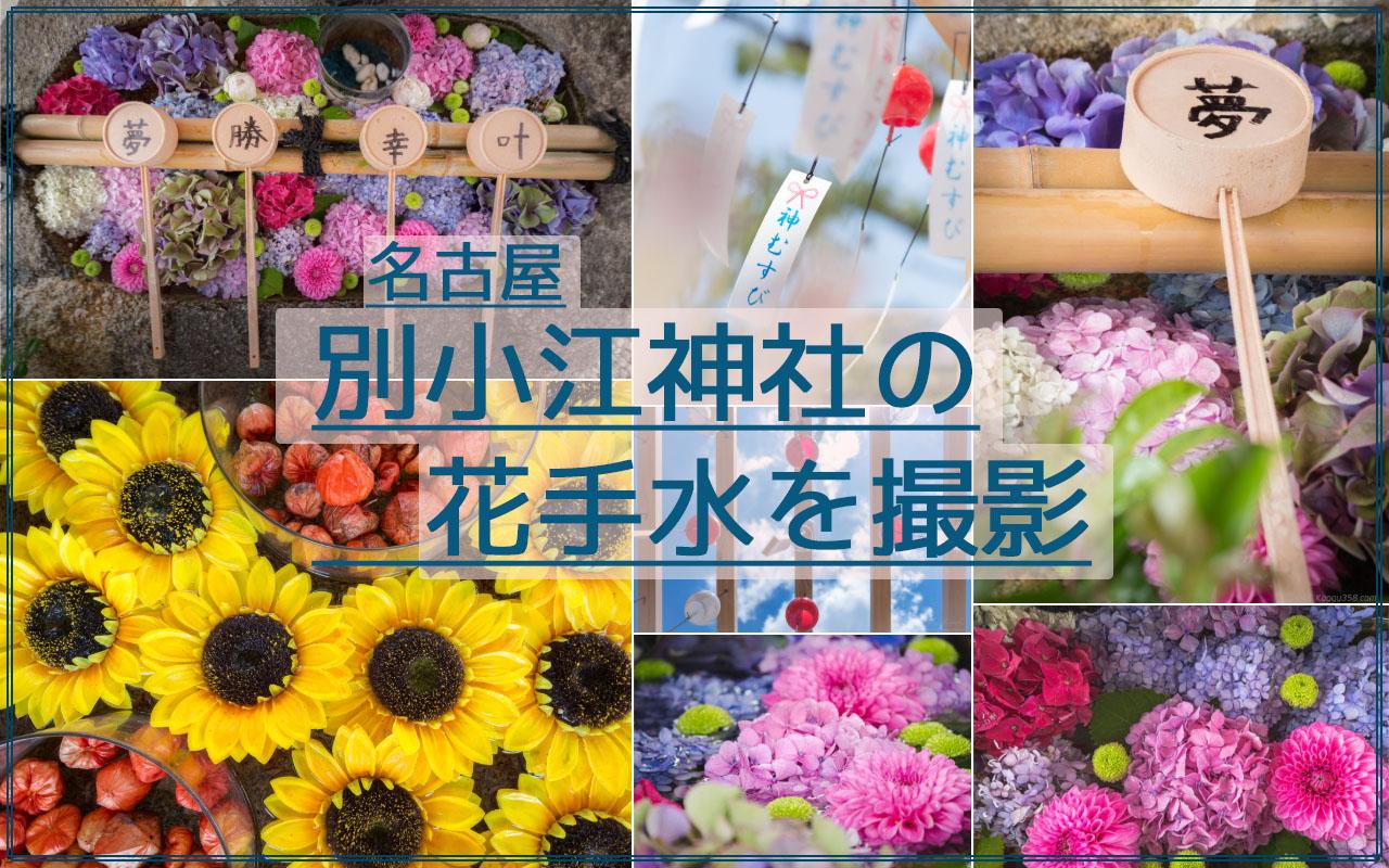 アクセス抜群!名古屋の別小江神社のあじさいやひまわりの花手水に風鈴を撮影