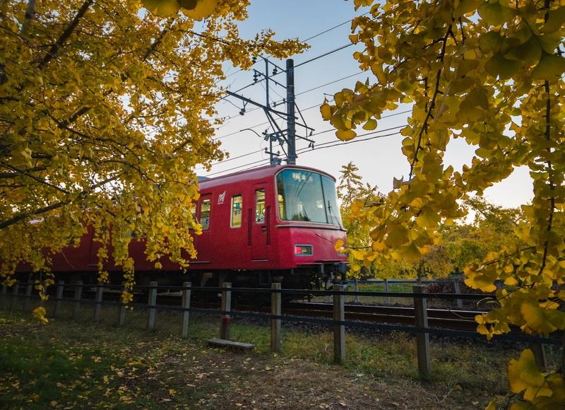 祖父江町でイチョウと名鉄電車を撮影【見ごろは11月末~12月頭】