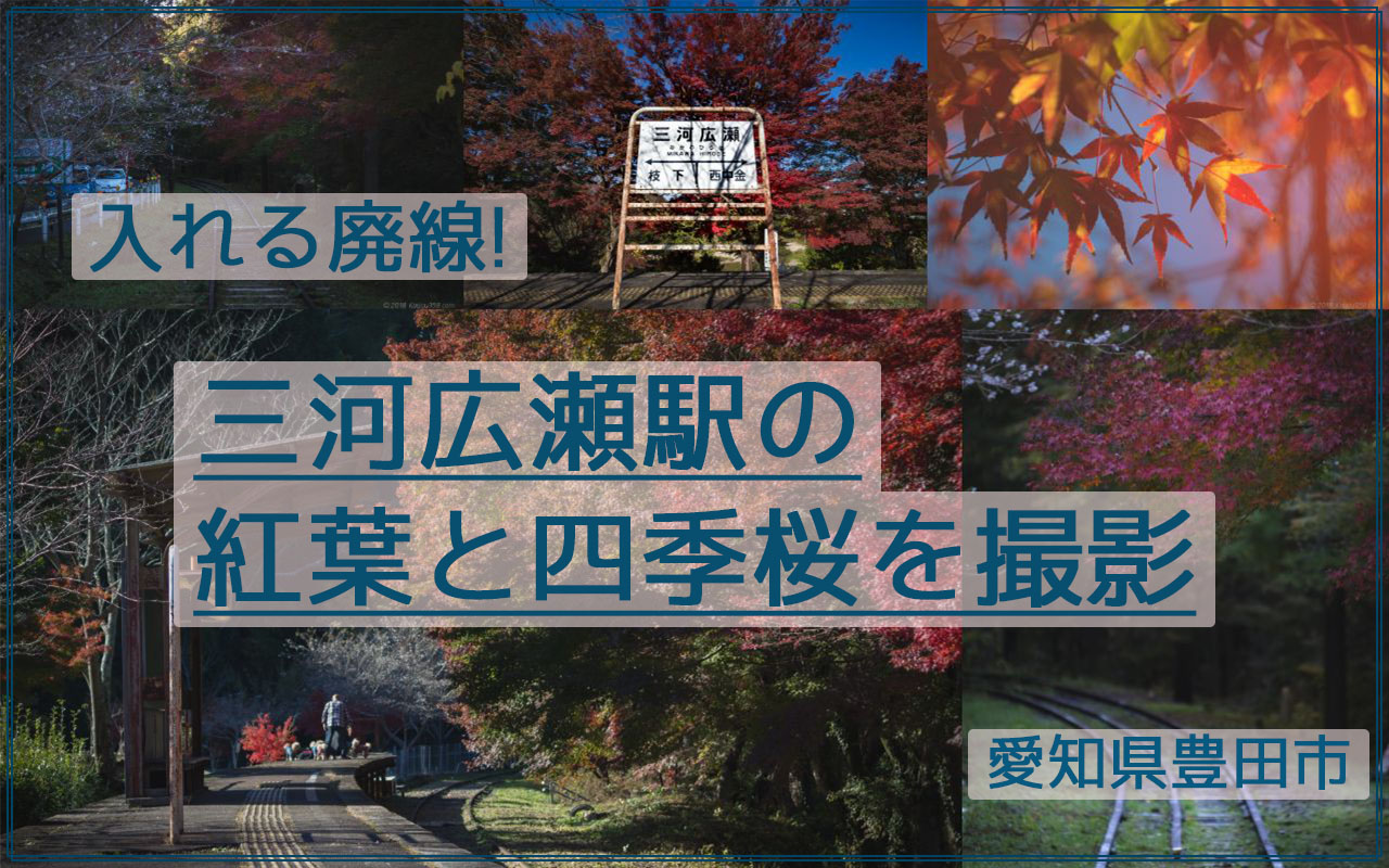 線路を歩ける廃線!三河広瀬駅で紅葉と四季桜を撮影【見頃は11月末】