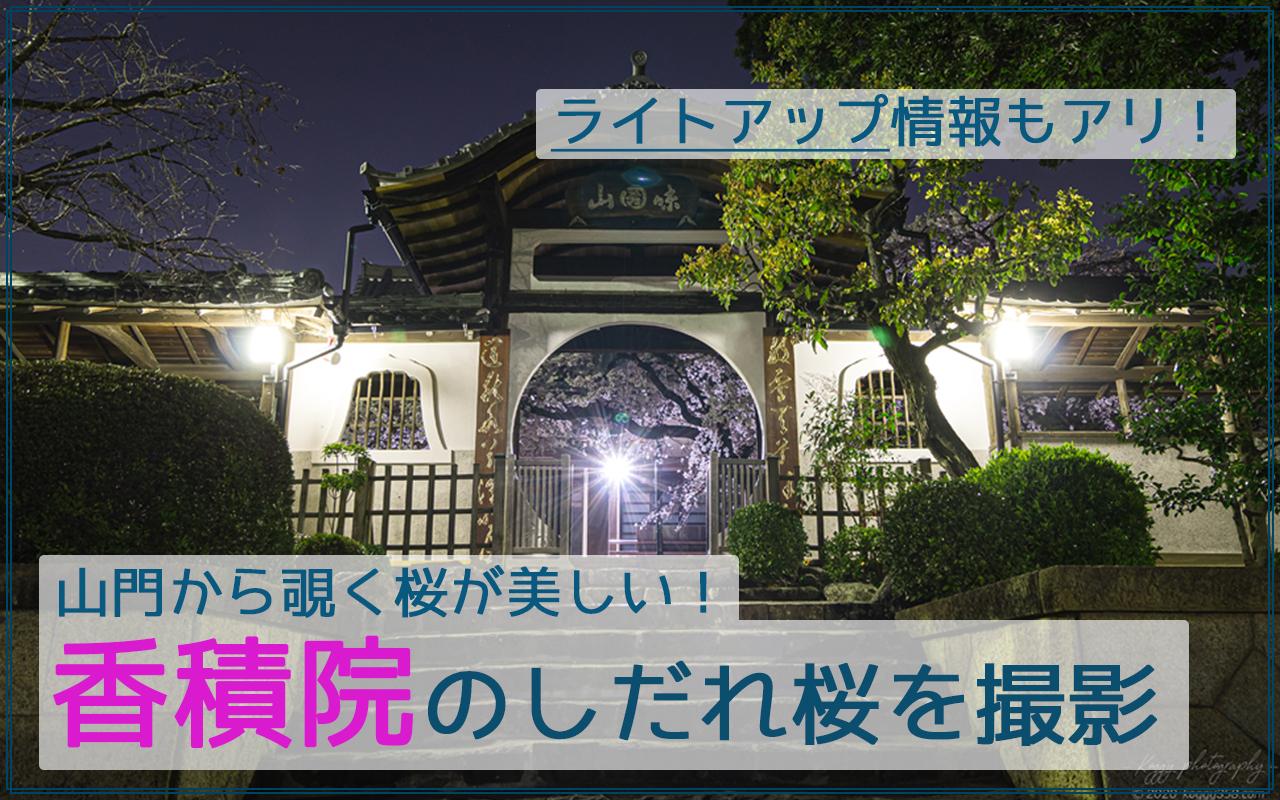 香積院(名古屋市昭和区)のしだれ桜の夜景を撮影【見頃や駐車場情報アリ】