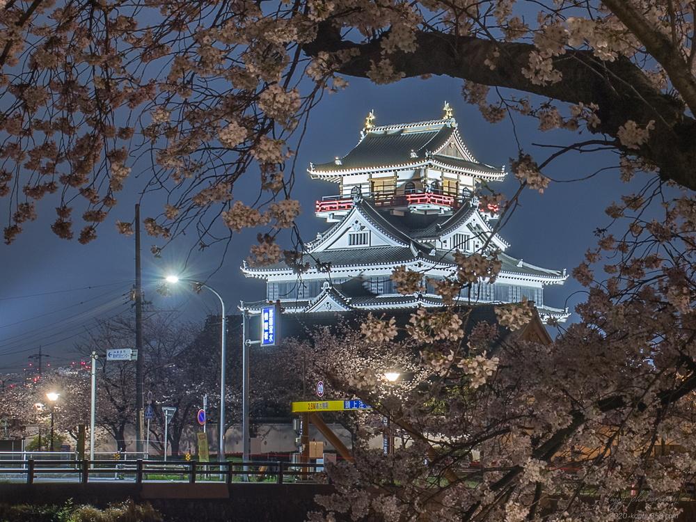 清洲城と桜の夜景を撮影!穴場スポット間違いなし【ライトアップの時間情報アリ】