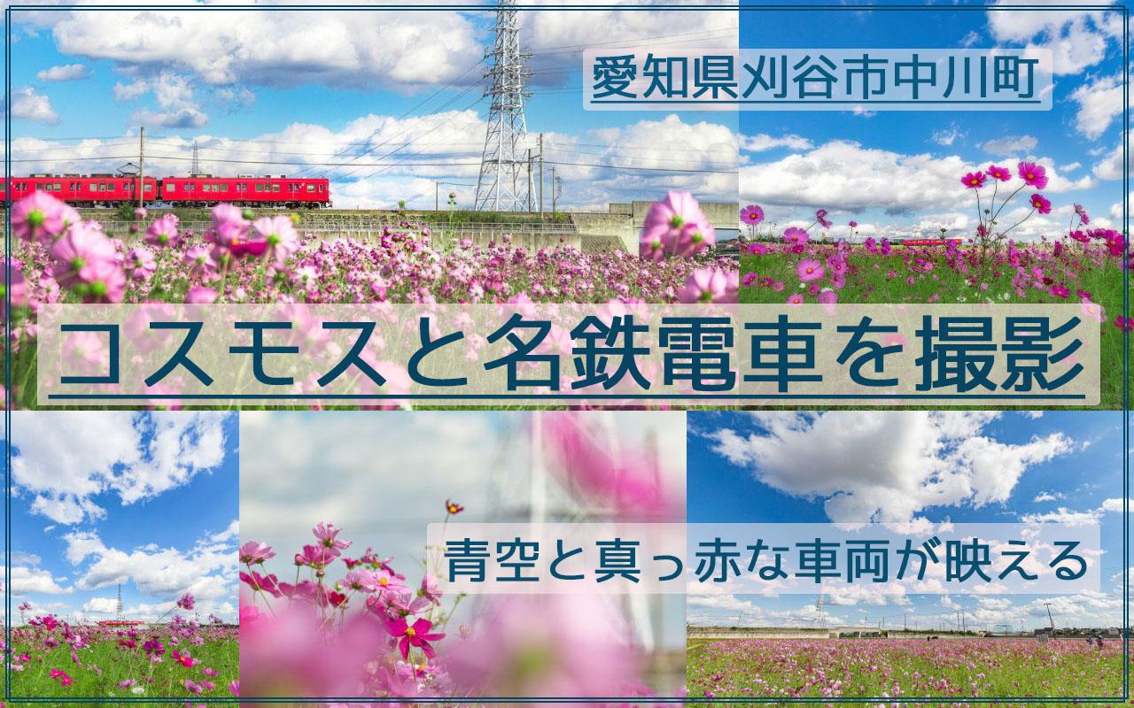 刈谷市中川町のコスモス畑と名鉄電車を快晴の青空の下で撮影