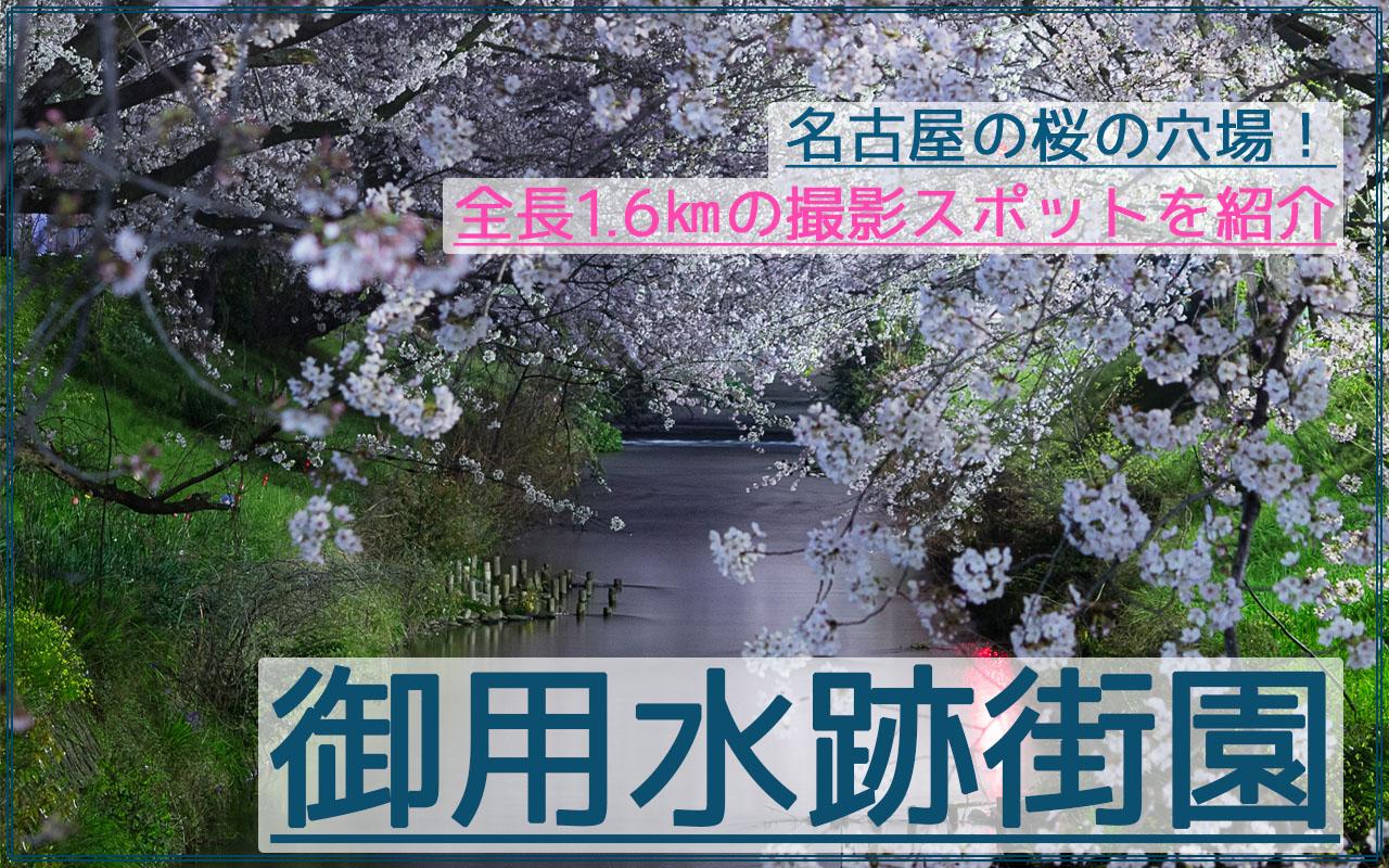 名古屋市の全長1.6㎞の穴場!御用水跡街園の夜桜夜景を撮影!