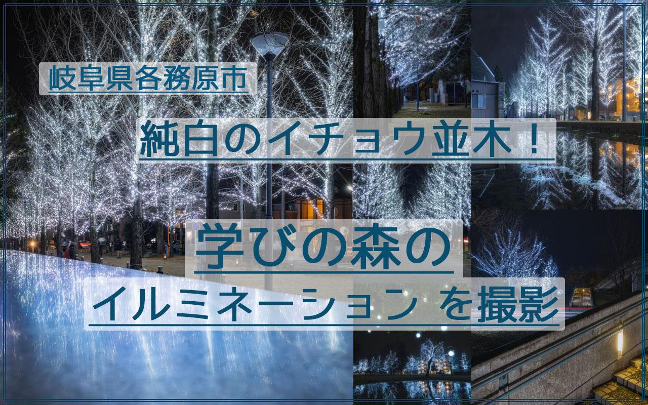 岐阜県 イルミネーションカフェ冬各務原市夜景無料紅葉 純白のイチョウ並木!岐阜の学びの森のイルミネーションを撮影