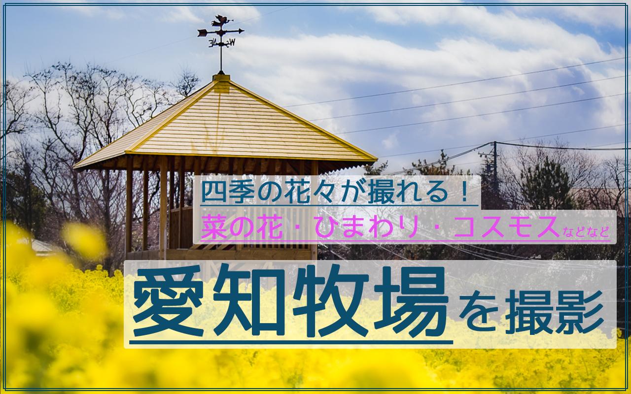愛知牧場の四季の花を撮影!菜の花/ひまわり/コスモスが美しい!
