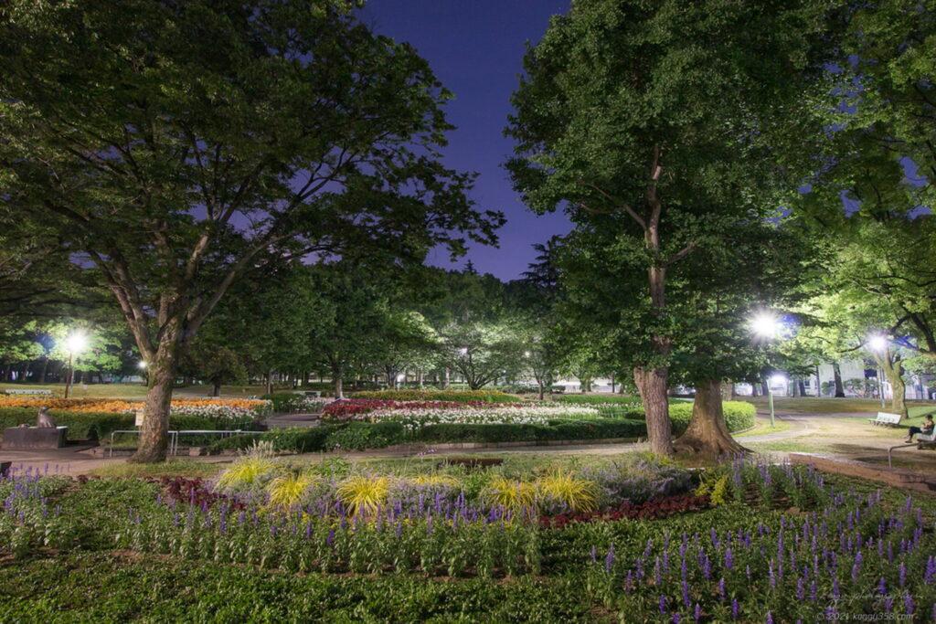 千種公園のゆり園で夜景を撮影