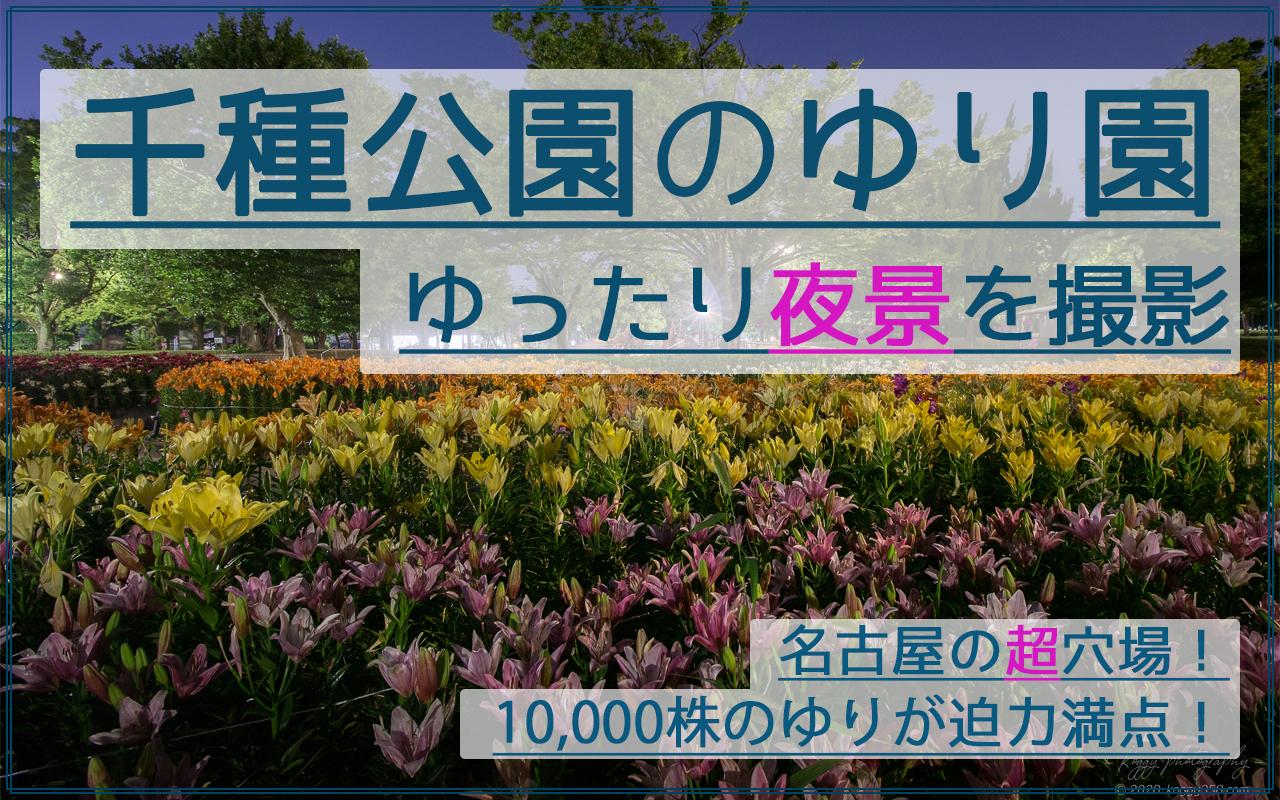 【ゆり10,000株の穴場】千種公園のゆり園で夜景を撮影!名古屋駅から20分!