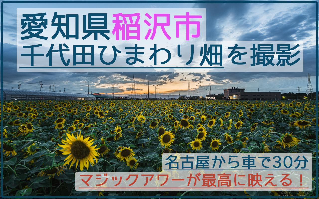 稲沢市の千代田ひまわり畑でを撮影!マジックアワーが映え!【名古屋から30分】