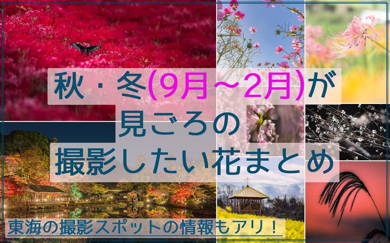 秋・冬(9月~2月)が見頃の花や木々の植物、19品種まとめ!東海の撮影スポット情報アリ!