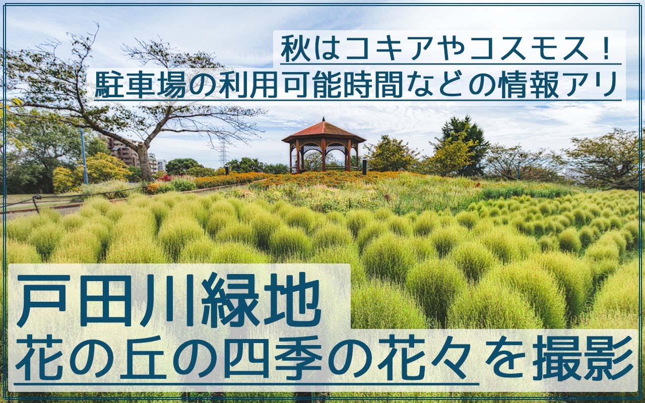 戸田川緑地の花の丘で秋にコキアを撮影