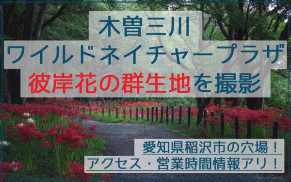 穴場!木曽三川ワイルドネイチャープラザで彼岸花の群生地を撮影!