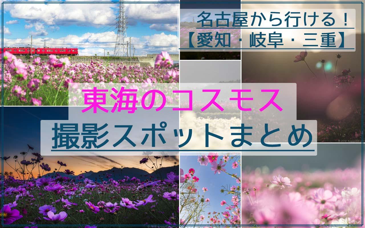名古屋近郊の東海のコスモスおすすめ撮影スポット40か所☆愛知/岐阜/三重の情報まとめ!